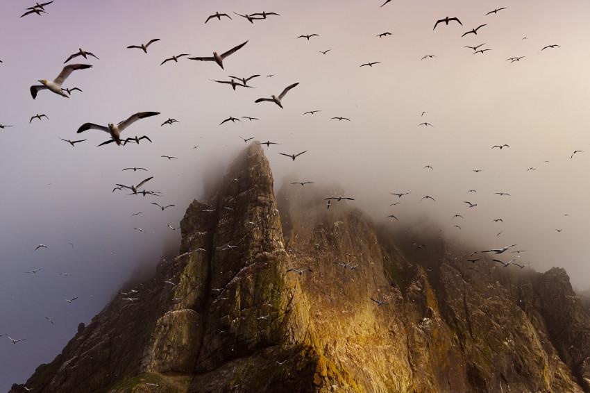 boreray-birds-richardson-850x566